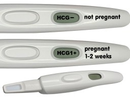 Display whether you are pregnant or not