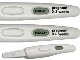 How long are you pregnant