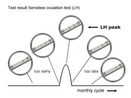 The test result in the middle gives your LH peak